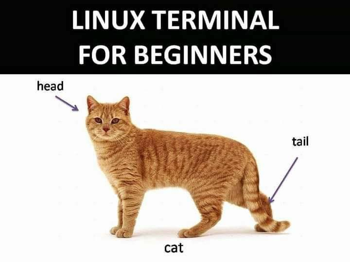 linux_terminal_commands_for_beginners.jpg
