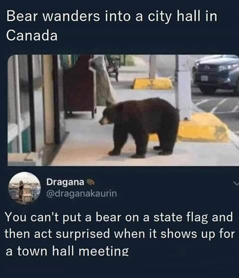 bear_on_a_flag.jpg