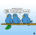 the-twitter-bird-in-real-life