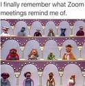 zoom-IS-muppet-show