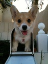 doggy-mail