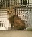 pixelated-cats5