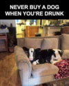 never buy a dog drunk