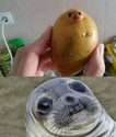 potatoseal