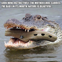 the mother croc
