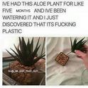 bad choice of aloe