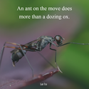 an ant on the move
